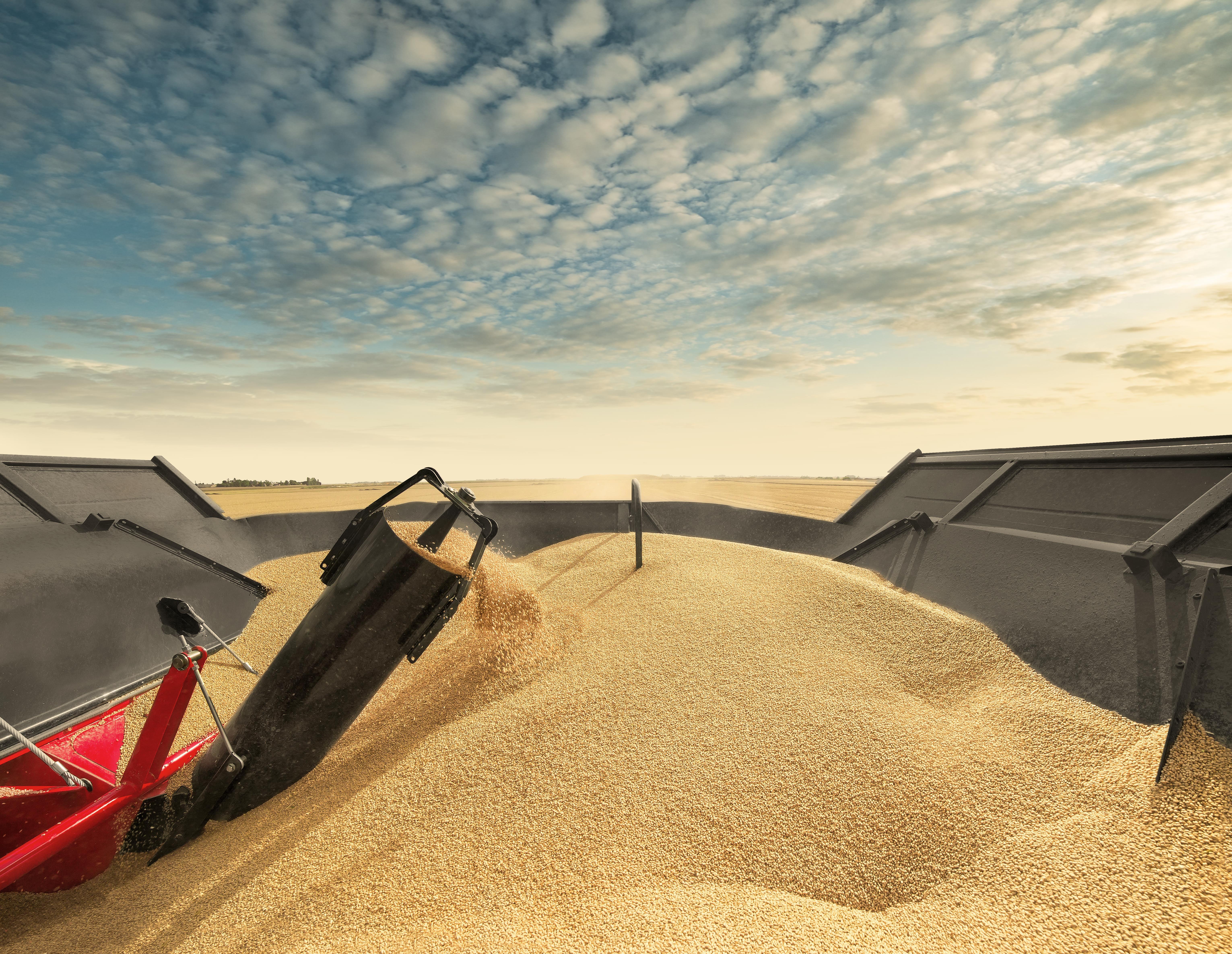 Grain Handling